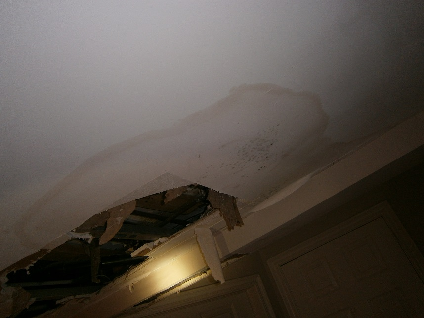 Mold Growth Due To Water Damage